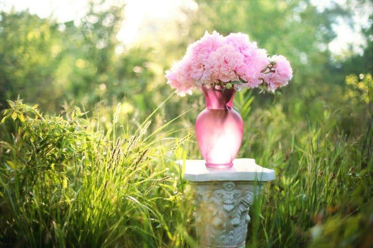 Hochzeitsglückwünsche – Wie schreibt man an das Brautpaar?